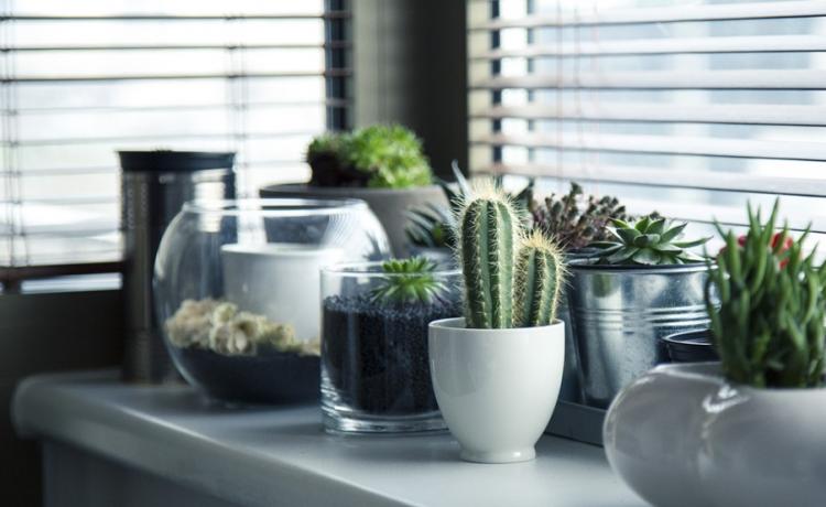Welke raamdecoraties zijn geschikt voor de keuken u woonkanjer